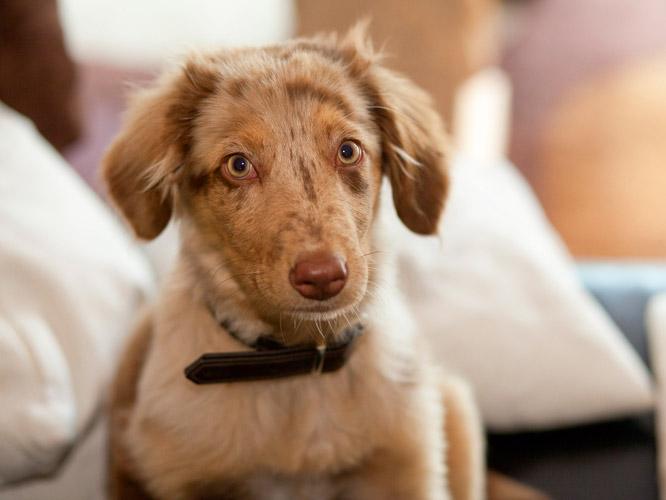 Ein Tier als Spielzeug. Kind wünscht sich Hund.